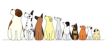 Dogs in a row,looking away. Dogs in a row in order of height, looking away stock illustration