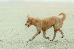 Dogs running Stock Images