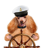 Dogs sailor Royalty Free Stock Image