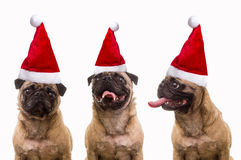 Dogs in Santa Hats Stock Image