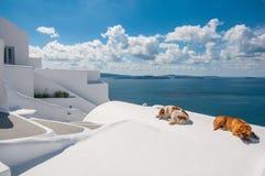 Dogs in Santorini Stock Photography