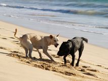 Dogs at sea beach Stock Image