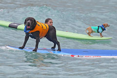 Dogs at sea Stock Photography
