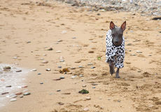 Dogs on seacoast Stock Photos