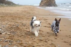 Dogs on seacoast Royalty Free Stock Photos