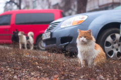 Dogs search sitting cat in the yard, then chasing Stock Images