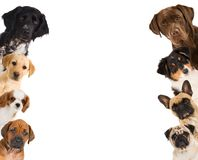Dogs see sideways in a window royalty free stock photography