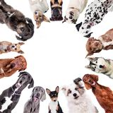 Different dogs in circle on white