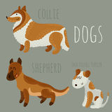 Dogs set. Set of cute dogs: Jack Russell Terrier, collie and shepherd Stock Image
