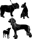 Dogs Royalty Free Stock Image