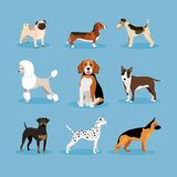 Dogs set Royalty Free Stock Photo