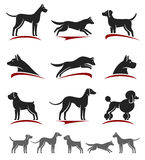 Dogs set. Vector Royalty Free Stock Photo