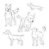 Dogs. Set of dogs on white background Stock Photography