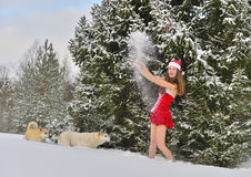 Dogs and Sexy young Santa-girl in in Christmas forest. Dogs and Sexy young Santa-girl in red with Christmas-tree decorations in pine forest Royalty Free Stock Images