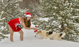 Dogs and Sexy young Santa-girl in winter forest. Dogs and Sexy young Santa-girl in red with Christmas-tree decorations in pine forest Royalty Free Stock Photo