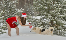 Dogs and Sexy young Santa-girl in winter forest. Dogs and Sexy young Santa-girl in red with Christmas-tree decorations in pine forest Royalty Free Stock Images