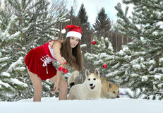 Dogs and Sexy young Santa-girl in winter forest. Dogs and Sexy young Santa-girl in red with Christmas-tree decorations in pine forest Royalty Free Stock Image