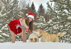 Dogs and Sexy young Santa-girl in winter forest. Dogs and Sexy young Santa-girl in red with Christmas-tree decorations in pine forest Stock Photos