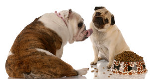 Dogs sharing a meal Stock Photo