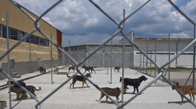 Dogs shelter. Homeless dogs behind fance outside, in a shelter Stock Images
