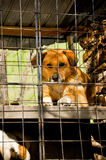 Dogs shelter Stock Image
