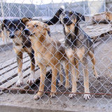 Dogs in shelter Stock Photography