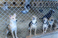 Dogs in shelter Royalty Free Stock Images