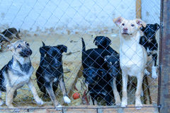 Dogs in shelter Stock Photo