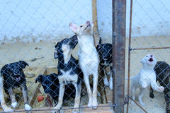 Dogs in shelter Royalty Free Stock Photos