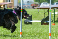 Dogs show Stock Photo