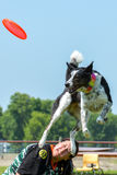 Dogs show. July 2015, - Selkirk town, MB, Canada - Dogs of different breeds participated in the competition jumping over hurdles Stock Photos