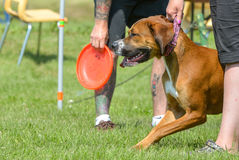 Dogs show. July 2015, - Selkirk town, MB, Canada - Dogs of different breeds participated in the competition jumping over hurdles Royalty Free Stock Photos