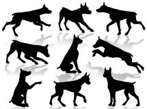 Dogs silhouette Stock Photography