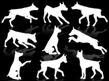 Dogs silhouette. Dog silhouette in different poses and attitudes Royalty Free Stock Photo