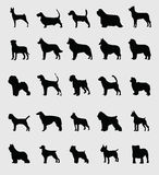 Dogs. Silhouette of dogs boxer pet mutt Stock Photography