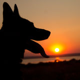 Dogs silhouette at sunset Royalty Free Stock Images