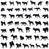 Dogs silhouettes Stock Image