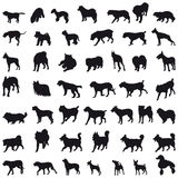 Dogs silhouettes Royalty Free Stock Photos