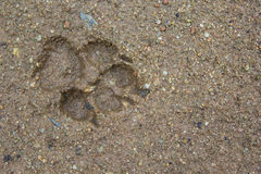 Dogs single paw footprint Royalty Free Stock Photos