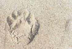 Dogs single paw print on the sand Royalty Free Stock Photo