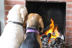 Dogs Sitting in Front of Fire. Two beagle dogs are sitting in front of the fire on a cold English day. They love to sit close together and snuggle up royalty free stock image