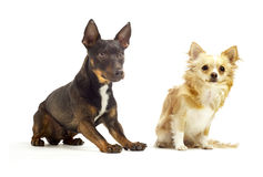 Dogs sitting next to each other Royalty Free Stock Photo