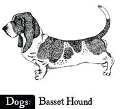 Dogs Sketch style Basset Hound Stock Photos