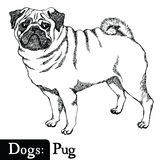 Dogs Sketch style Pug Stock Images