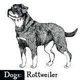 Dogs Sketch style Rottweiler Stock Photography