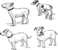 Dogs sketches Stock Photography