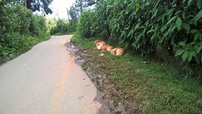 Dogs sleeping road side stock images