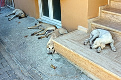 Dogs are sleeping on the street Stock Image
