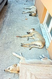 Dogs are sleeping on the street Royalty Free Stock Photography
