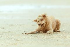 Dogs and small crabs Royalty Free Stock Photography